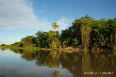 phoca_thumb_l_pantanal_guyraparaguay_af11