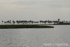 phoca_thumb_l_pantanal_guyraparaguay_af2