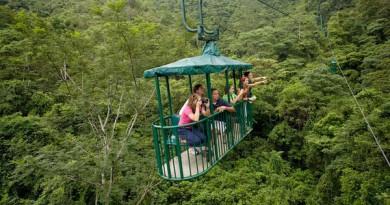 senalan-como-el-cambio-climatico-afecta-a-los-bosques-tropicales_full_landscape