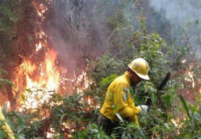 Se perdieron 500 hectáreas de bosques, con el último incendio forestal