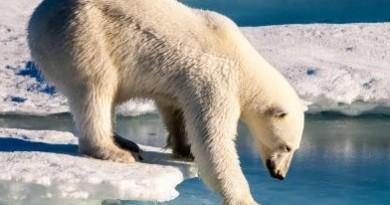 Hielo en el Óceano Ártico disminuye a su segundo menor nivel