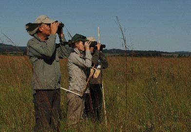 """Monitoreo de aves del proyecto """"Efectos del manejo ganadero sobre el ensamble de aves de pastizal.."""""""