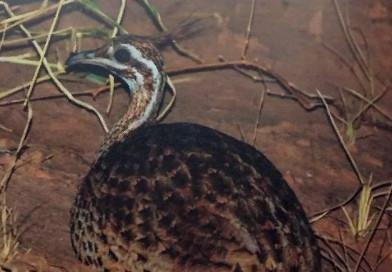 Capacitación de Guardaparques de los Parques Nacionales del Chaco Seco de Paraguay