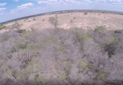 Discuten estrategias de conservación para el Chaco debido a las altas tasas de deforestación