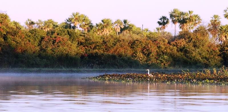 37.Pantanal