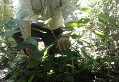 Inicio d actividades para producción d plantines d especies forestales nativas en el vivero Estación Kangüery