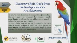 Campaña de Identificación de guacamayos_1