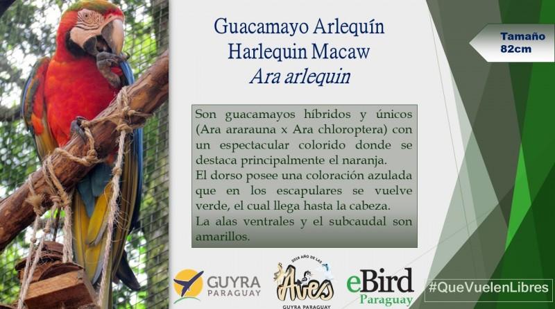 Campaña de Identificación de guacamayos_4