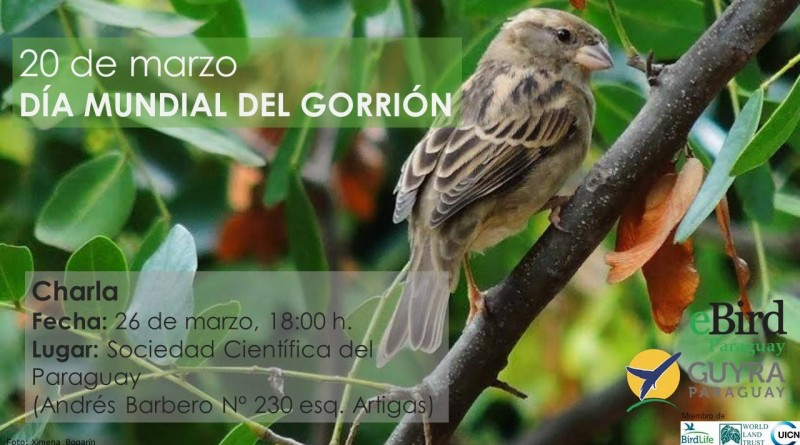 Gorrión day