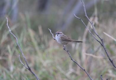 Evalúan hábitats de localidades del Chaco Seco para la observación de especies migratorias